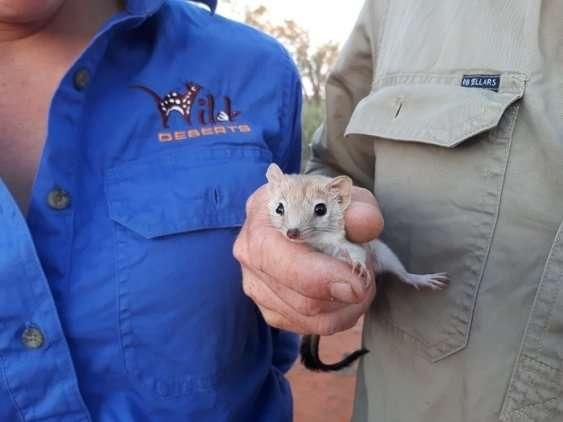 Mammal long thought extinct in Australia resurfaces