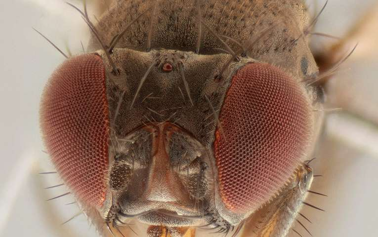 Mating mix-up with wrong fly lowers libido for Mr. Right