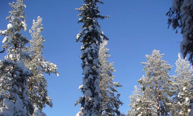 Melting snow aids absorption of carbon dioxide
