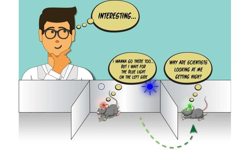 Mice in social conflict show rule-observance behavior