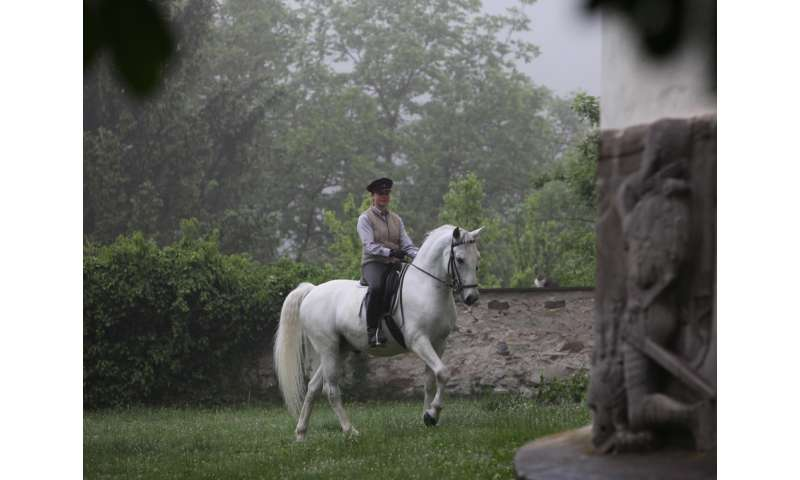 Most modern horses are descendants of recently imported oriental stallions