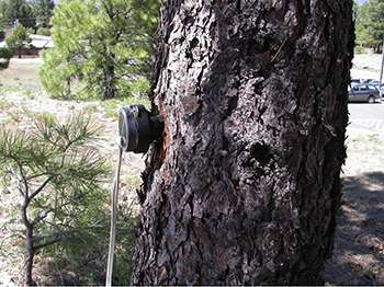 Music professor receives patent to help fight bark beetles ravaging Western forests