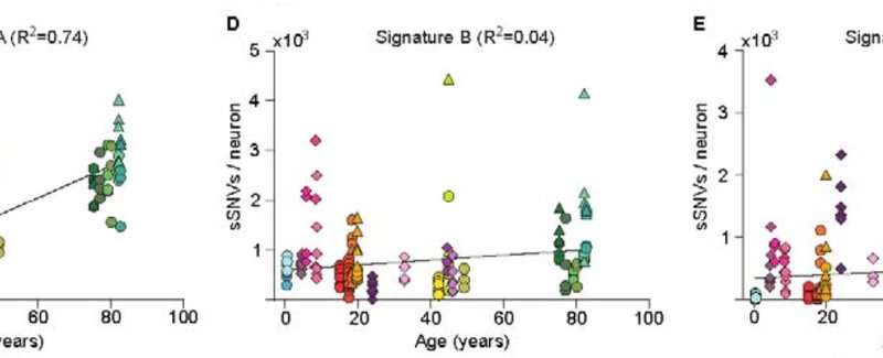 Mutations in neurons accumulate as we age; may explain normal cognitive decline & neurodegeneration