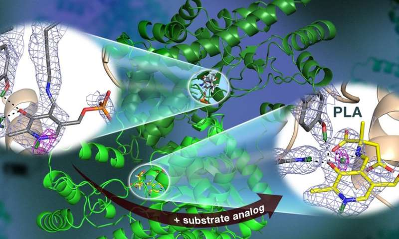Neutrons observe vitamin B6-dependent enzyme activity useful for drug development