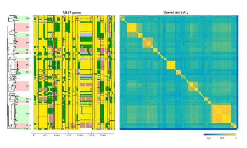 New algorithm identifies gene transfers between different bacterial species