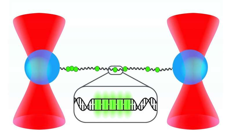 New form of DNA discovered