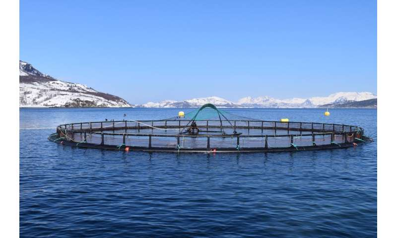 New procedure for faster detection of environmental impacts from salmon farms