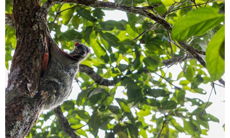 New species discovered in Malaysian rainforest during unprecedented, top-to-bottom survey