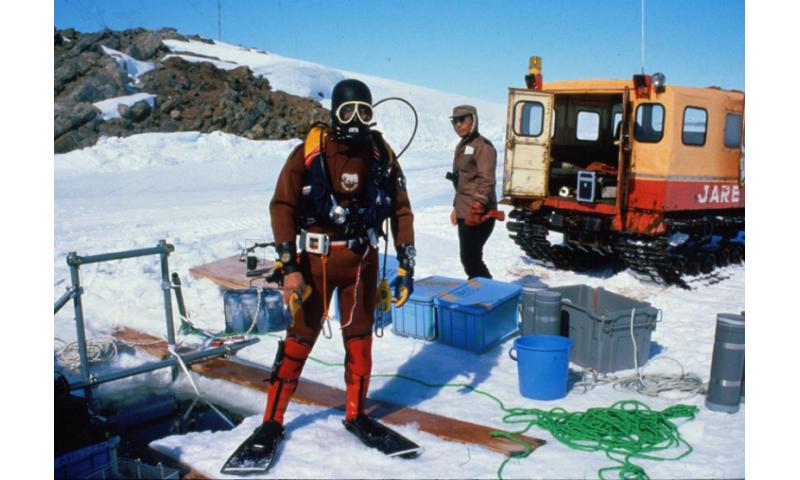 New species discovered in Antarctica