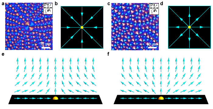 Observation of the phase transition of liquid crystal defects for the first time