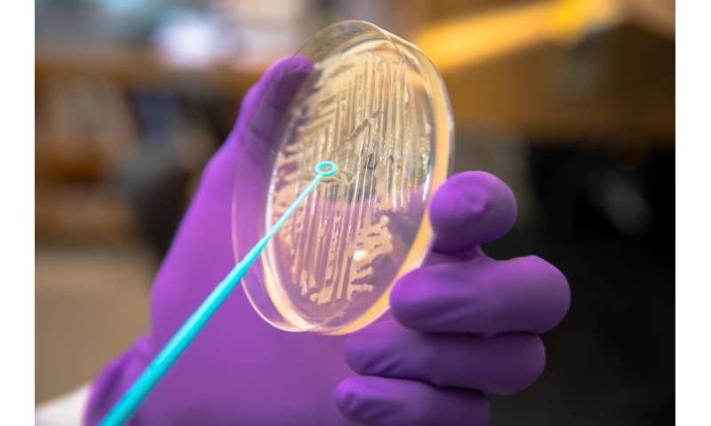 Once invincible superbug squashed by 'superteam' of antibiotics