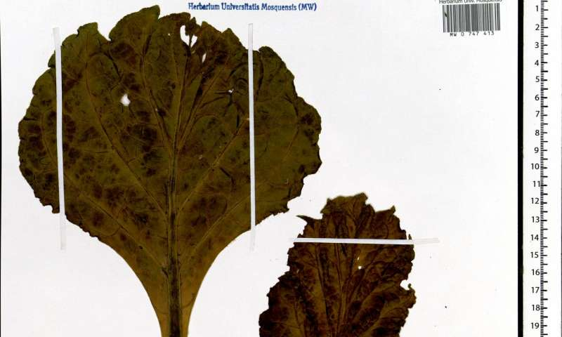 One of the world largest digital herbaria launched