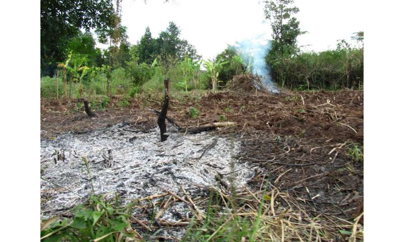 Paying farmers not to cut down trees in Uganda helps fight climate change, new study shows