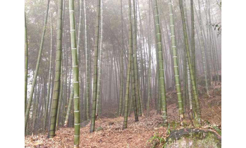 Payments to rural communities offer a new opportunity to restore China's native forests
