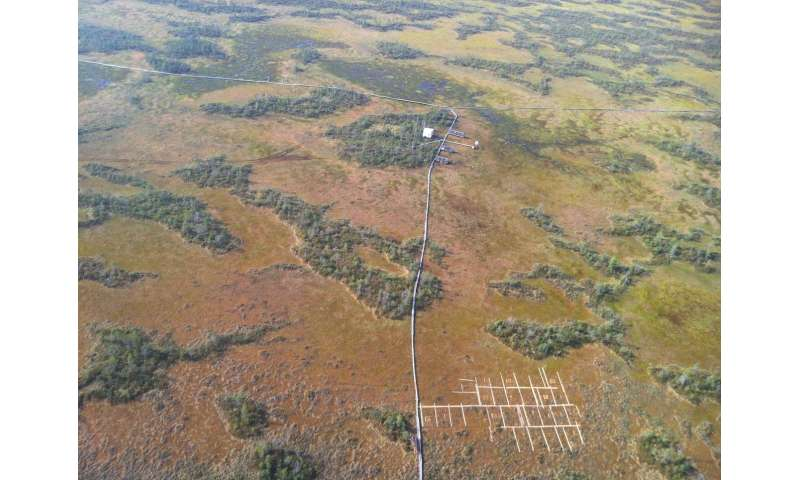 Peat bogs defy the laws of biodiversity