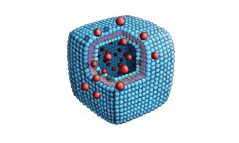 Phosphorus-containing lipid molecule self-assembles into a cuboid structure