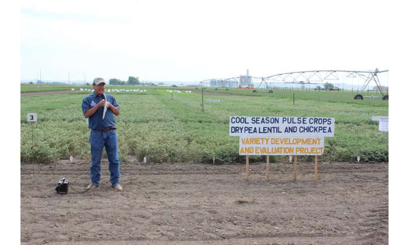 Promising peas' potential in big sky country