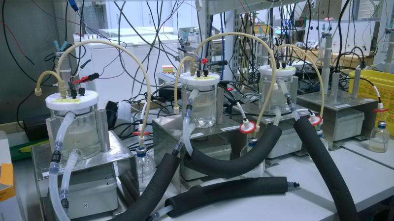 Protein produced with electricity to alleviate world hunger