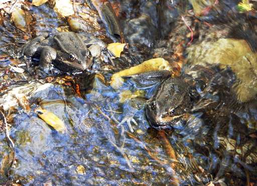 Rare frog discovery has researchers hopping for joy