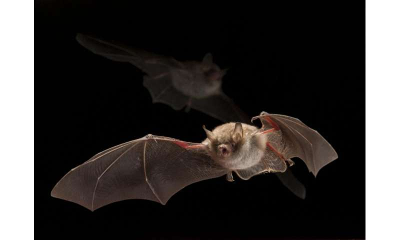 Red light has no effect on bat activity: Less disruption by changing artificial color