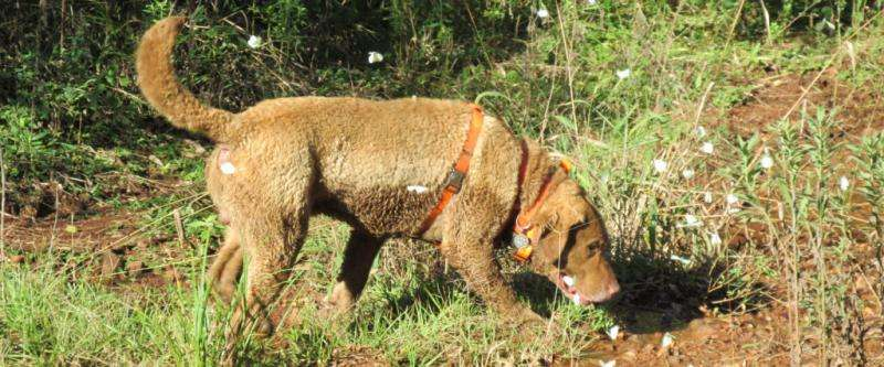 Research dog helps scientists save endangered carnivores