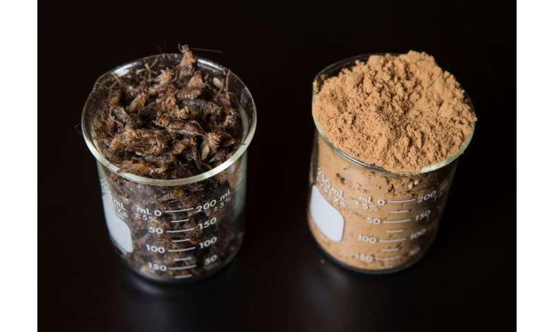 Researchers still insisting that people in the U.S. will eat bugs for protein