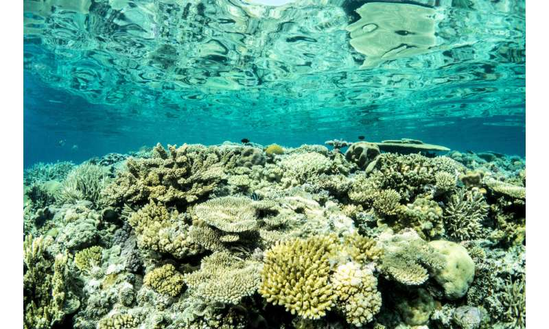 Resilience Of Great Barrier Reef Offers Opportunities For