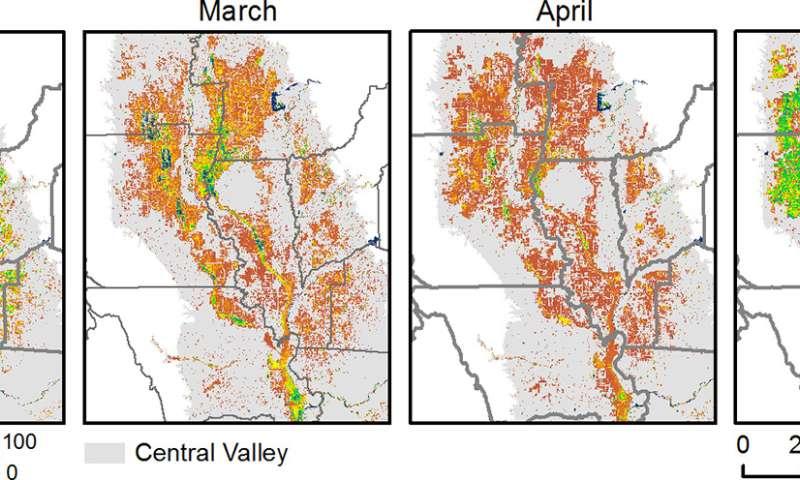 Satellites reveal bird habitat loss in California