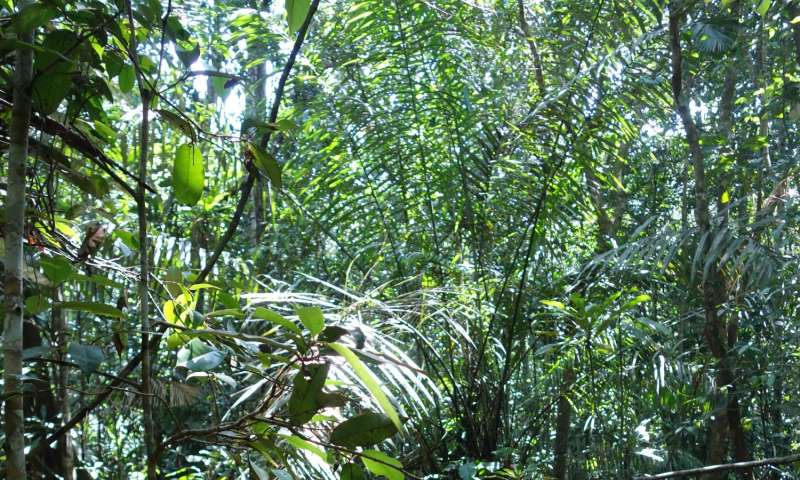 Scientists discover world's largest tropical peatland in remote Congo swamps
