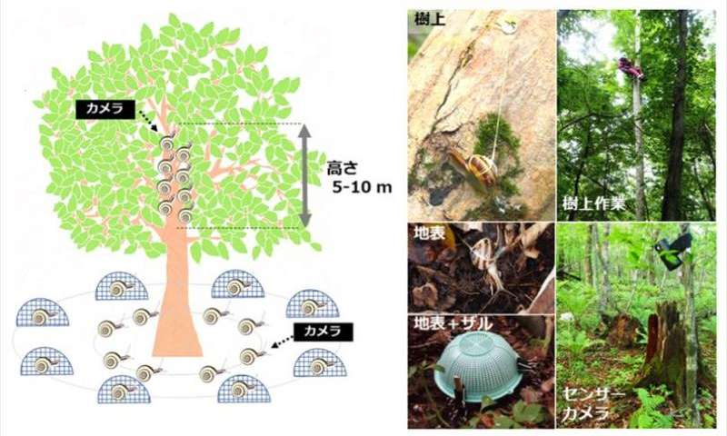 Scientists go out on a limb to study tree-climbing land snails