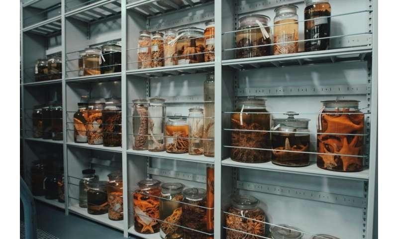 Scientists link biodiversity genomics with museum wisdom through new public database