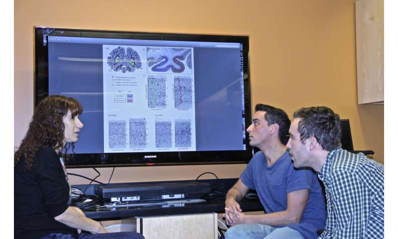 Stanford study shows development of face recognition entails brain tissue growth