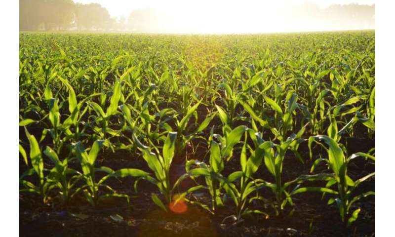 Study calculates how much poo increases crop growth and reduces pollution