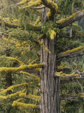 Study documents tree species' decline due to climate warming