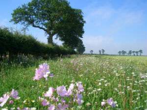 Study finds unused farmland could be key to aiding the survival of farmland birds