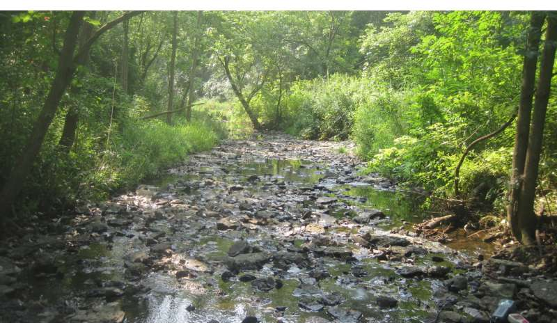 Study shows removing invasive plants can increase biodiversity in stream waters