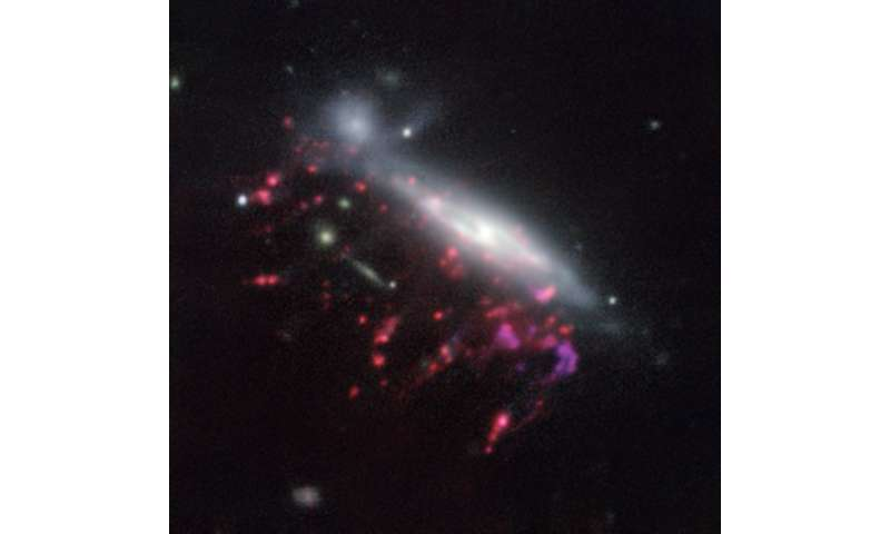 Supermassive black holes feed on cosmic jellyfish