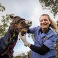 Survey reveals why WA horses are saddled with tooth decay