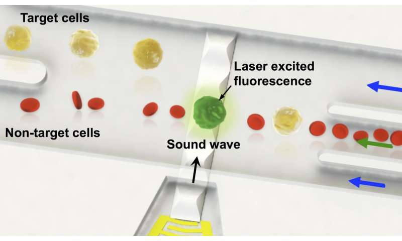 SUTD researchers developed single cell level sorting technology using sound waves