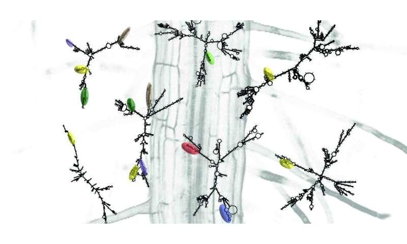 Team identifies genetic target for growing hardier plants under stress