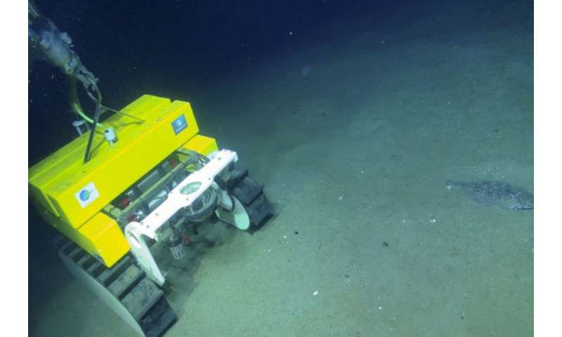 Technologies shine spotlight on climate role of undersea canyons