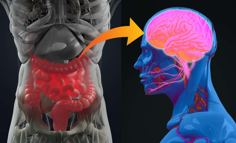 The brain and the gut talk to each other—how fixing one could help the other