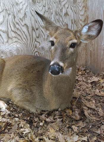 The buck stops where? Case exposes rift over caring for deer