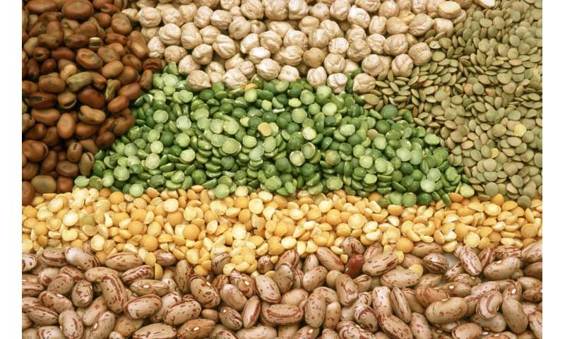 The consumption of legumes is associated with a lower risk of diabetes