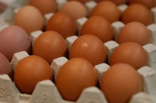 "The scientists now have three hens whose eggs containing the drug ""interferon beta"", with the birds laying eggs almost"