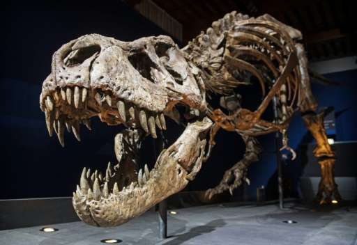 The skeleton of a T rex named Trix is installed in a room of the Naturalis Museum of Leiden, Netherlands on September 9, 2016, d
