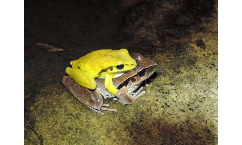 This dance is taken: Hundreds of male frog species change colors around mating time