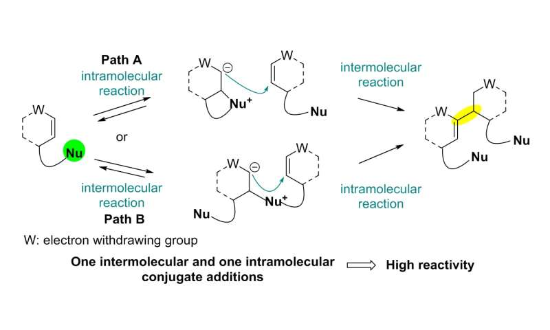 Total synthesis of flueggenine C via an accelerated intermolecular Rauhut-Currier reaction