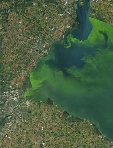 Toxic algae flourishes despite vast sums spent to prevent it