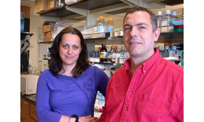 Unexpected regulation of transcription factors critical to development